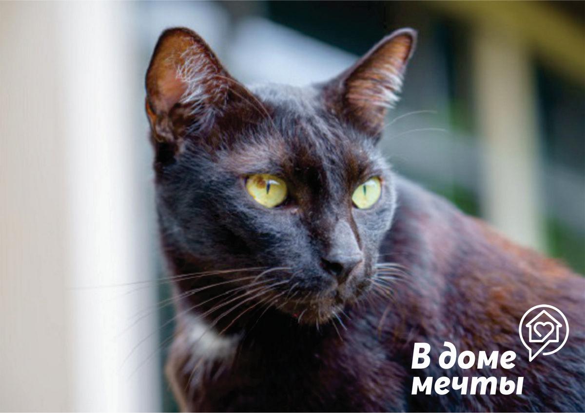 Кошка испытывает стресс: основные признаки