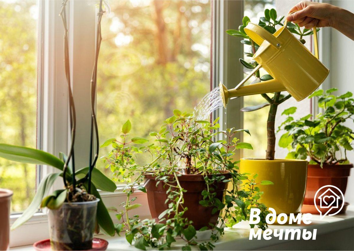 цветущие и декоративно-лиственные комнатные