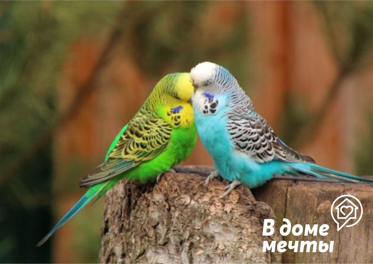 Лакомство для птицы: чем можно угостить пернатых, кроме корма