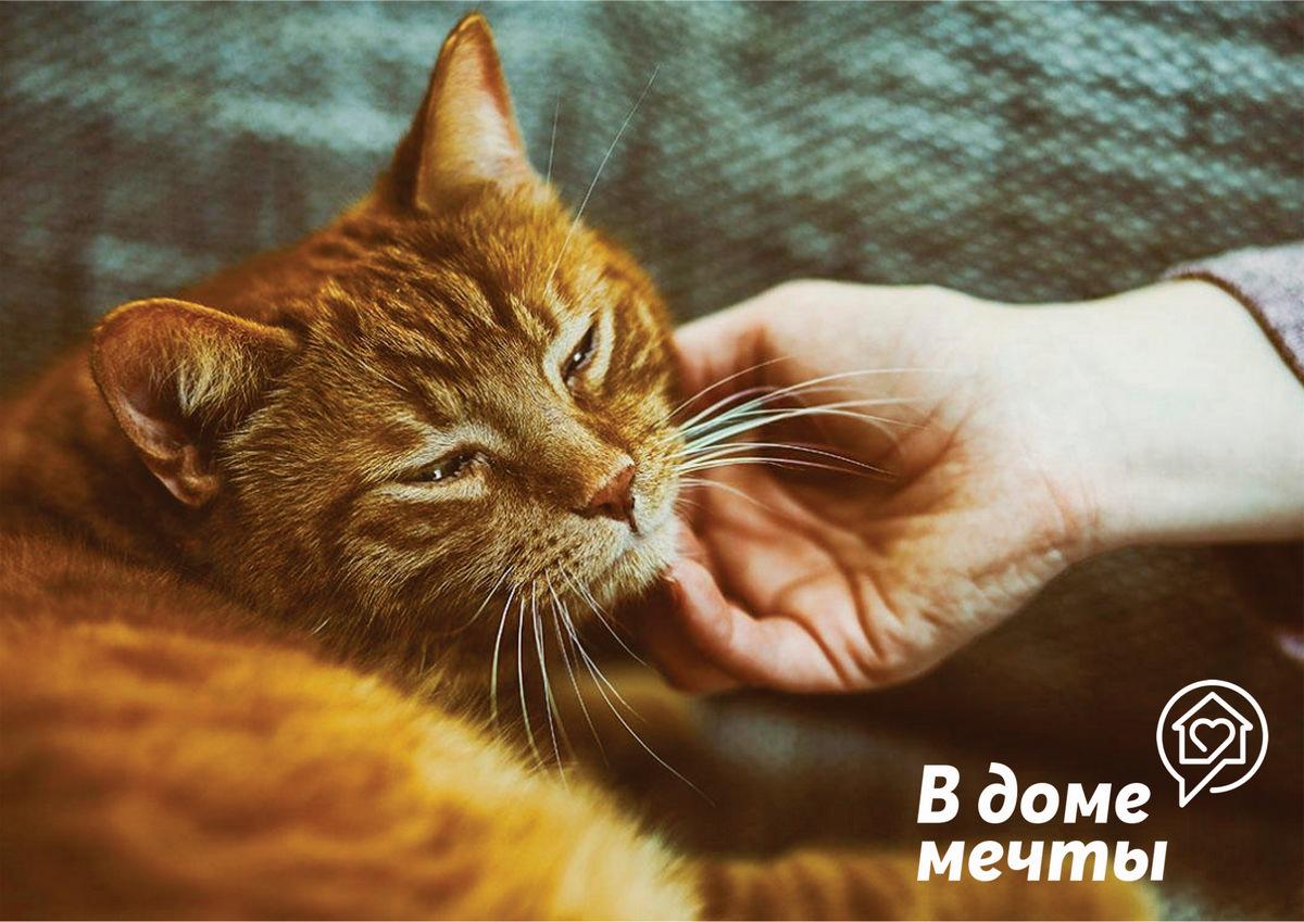 Если кошка испытывает стресс: первая помощь животному