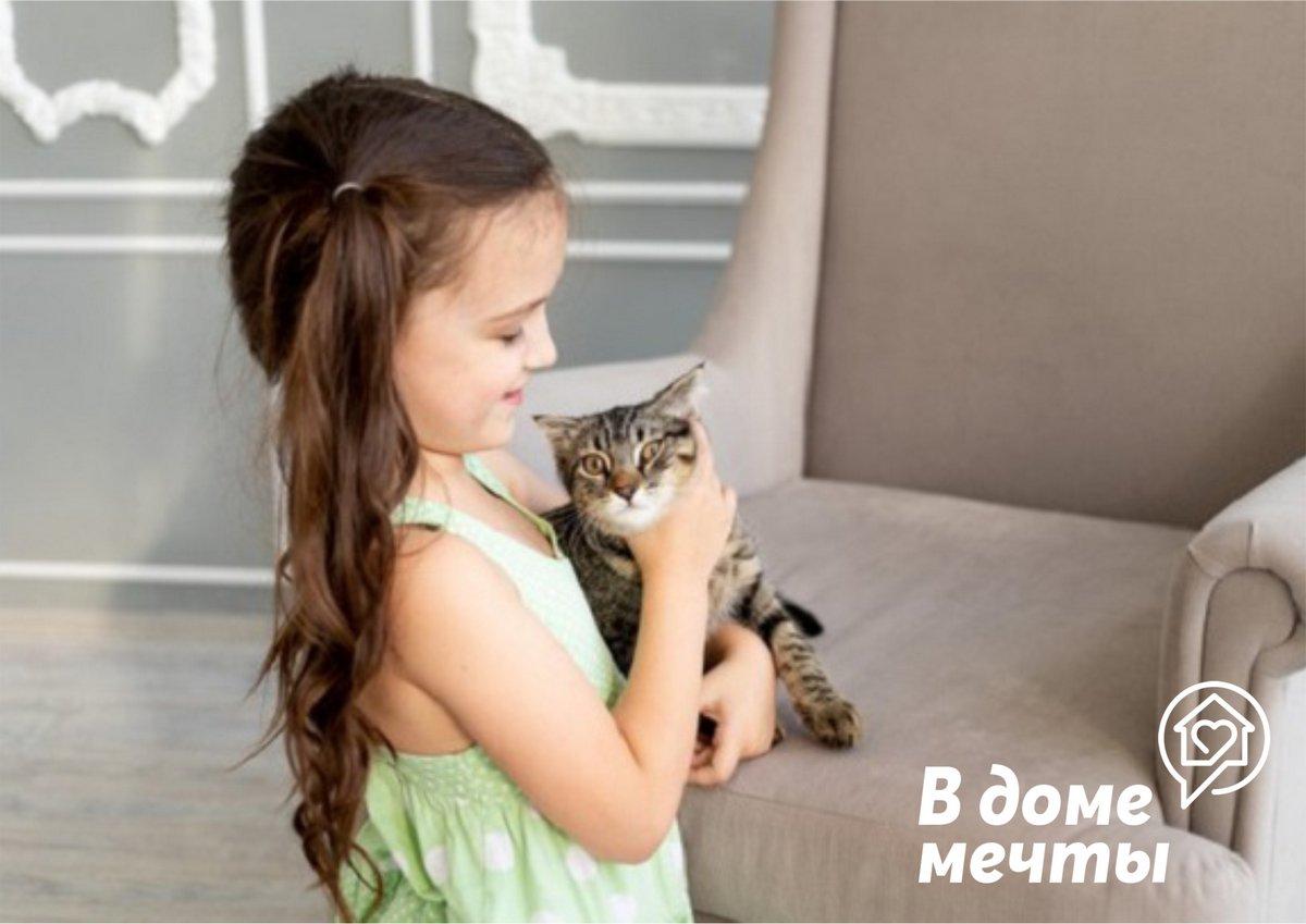 Как подружить малыша с кошкой