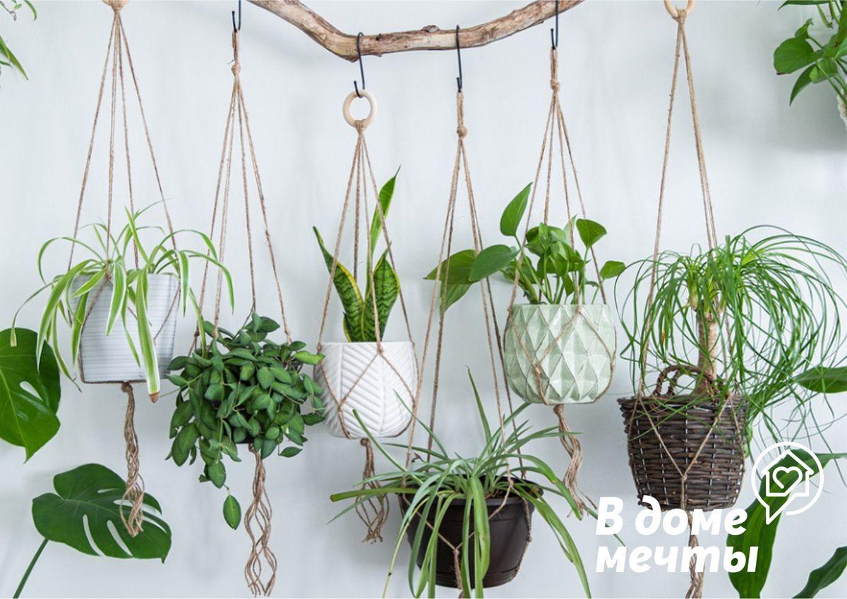 Эффективный арсенал: лучшие органические удобрения для подпитки декоративно-лиственных и цветочных культур