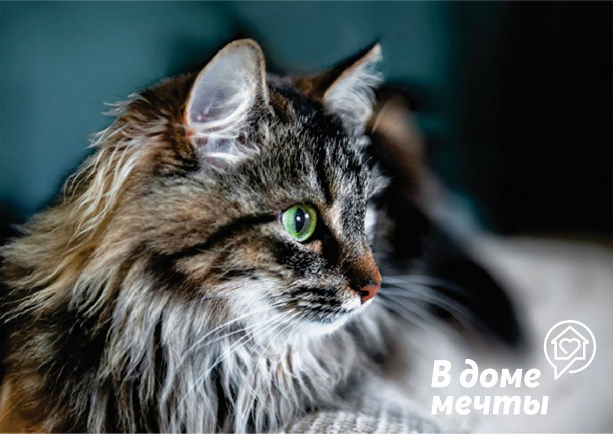Причины стресса у кошачьих