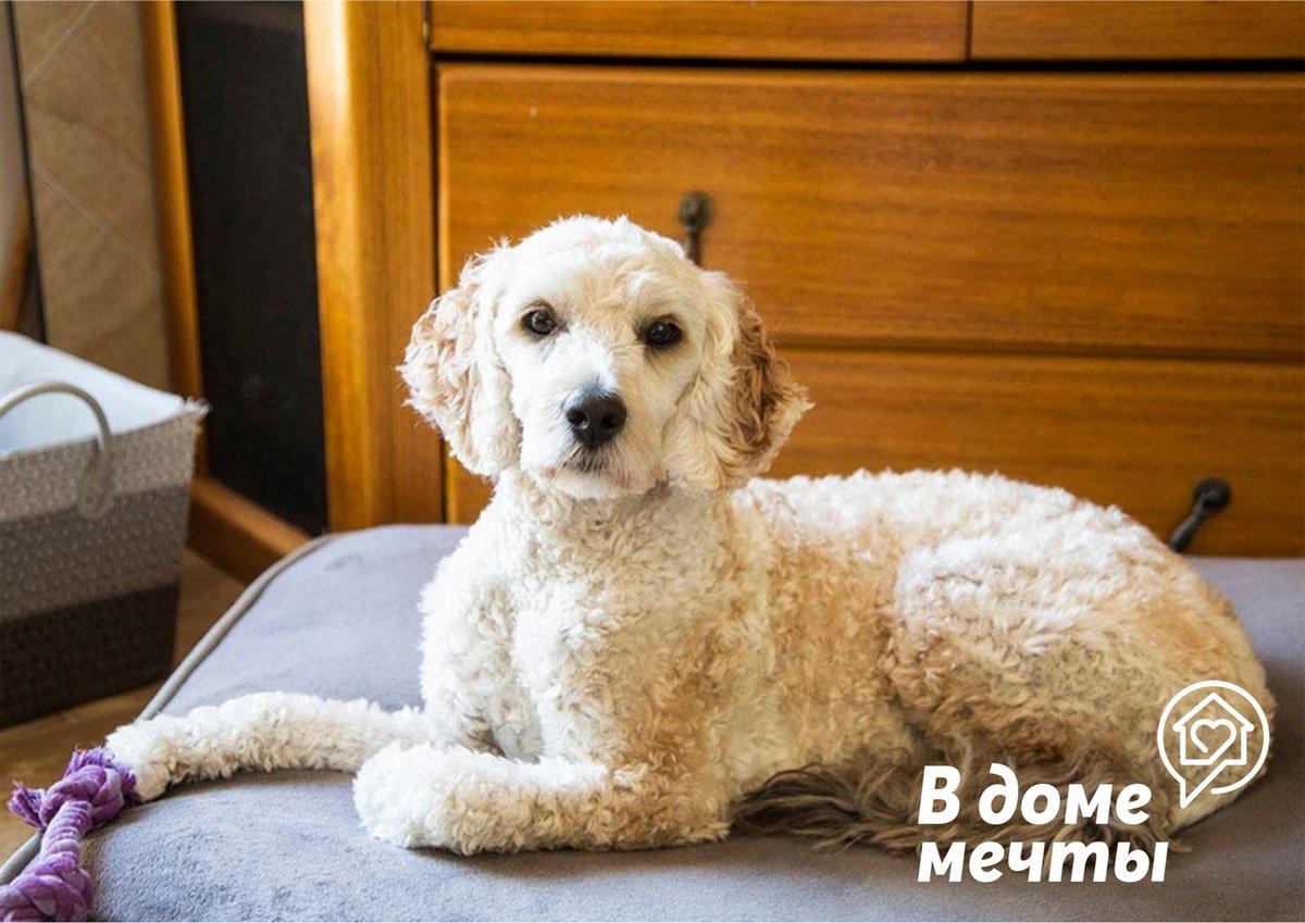 Собака для начинающих: топ-6 спокойных и дружелюбных пород