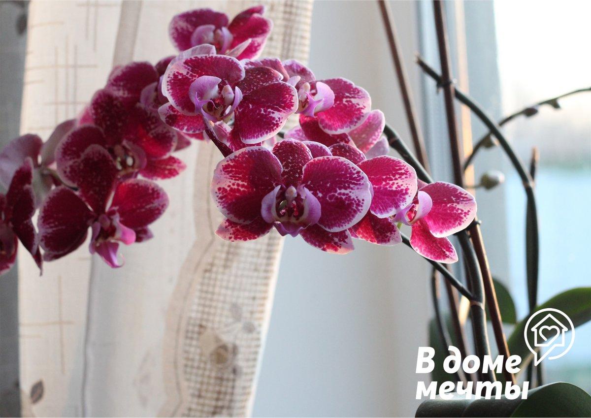 Идеальный орхидный субстрат: какие компоненты добавить в грунт для орхидеи