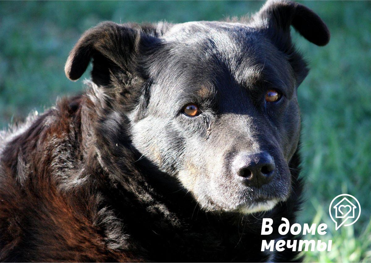 Возможна ли дружба между кошкой и собакой? Топ-8 дружелюбных пород собак, которые уживаются со всеми домашними питомцами