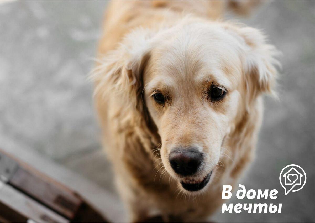 Самые дружелюбные породы собак и лучшие друзья кошек: топ-8 пород