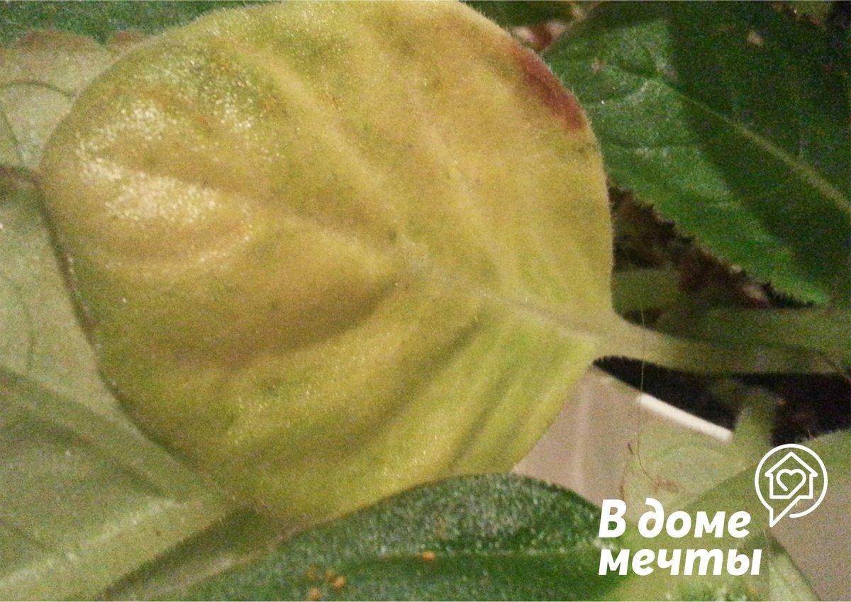 Как обнаружить и избавиться от паутинного клеща: защищаем комнатные и садовые растения