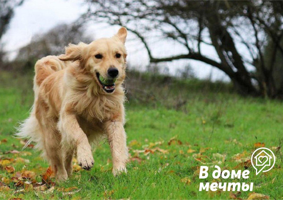 Воспитание собаки - не менее ответственная задача