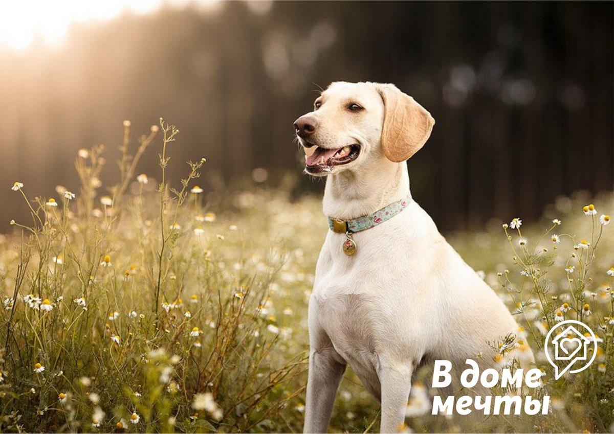 Лучшие породы собак для новичков в собаководстве
