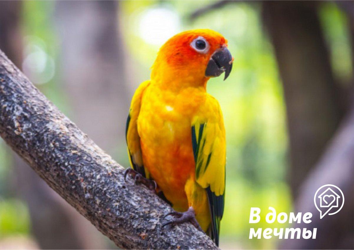 Определяем пол у разных видов попугаев: отличительные черты