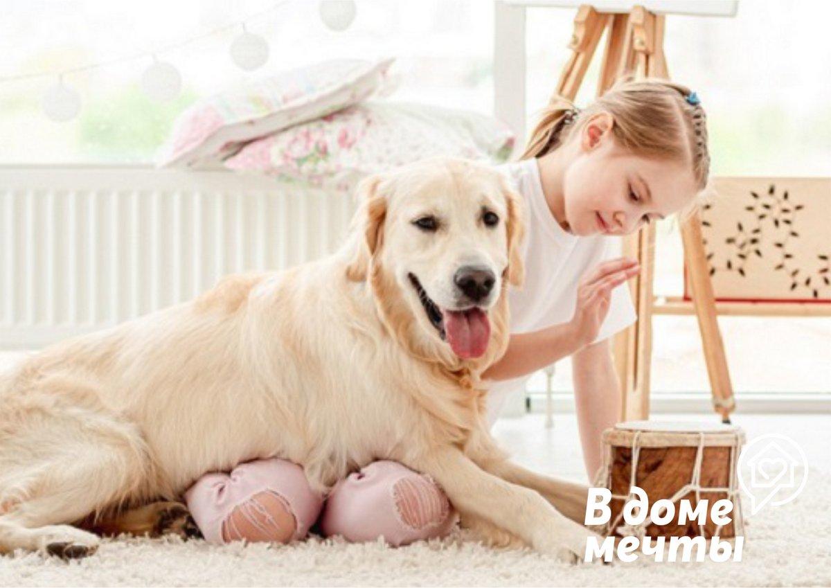 Стресс у домашней собаки: топ-9 причин