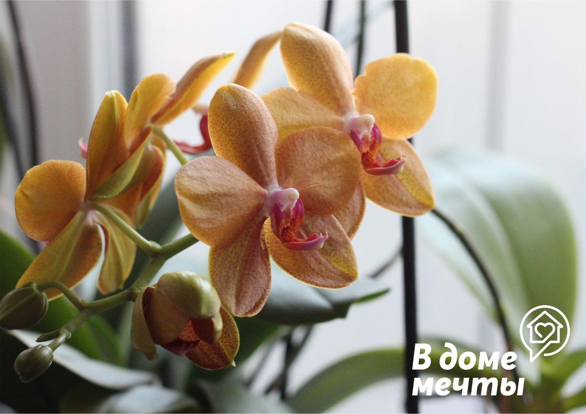 В ожидании лета: как ухаживать за сортовыми орхидеями в самый жаркий сезон