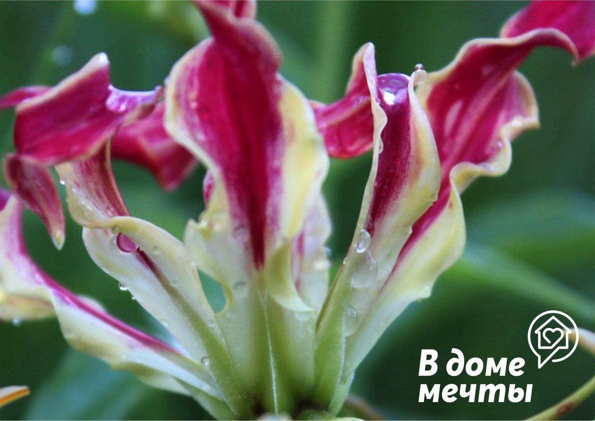 Подкормки тропическое растение очень любит