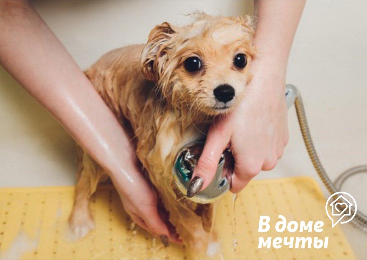 Купание собаки дома: как нужно купать домашнего щенка