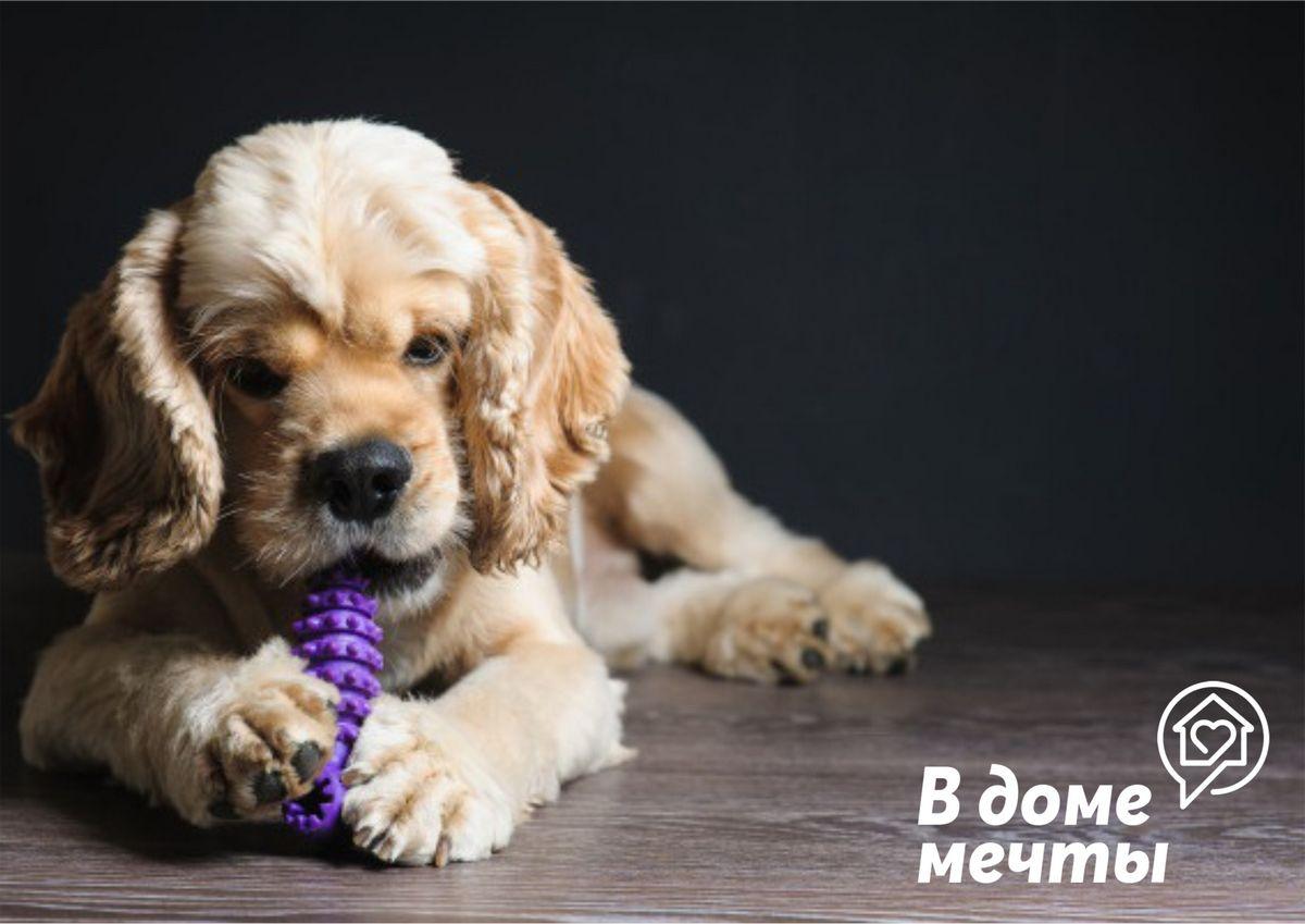 Лучшие игрушки для собак: полный гайд