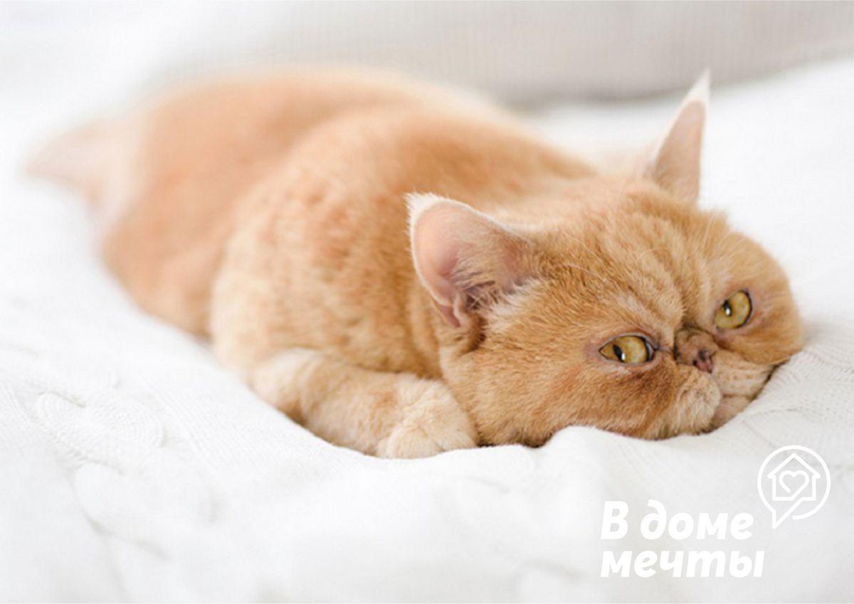Идеальная и уютная лежанка: как выбрать уютный уголок для комфортного кошачьего сна