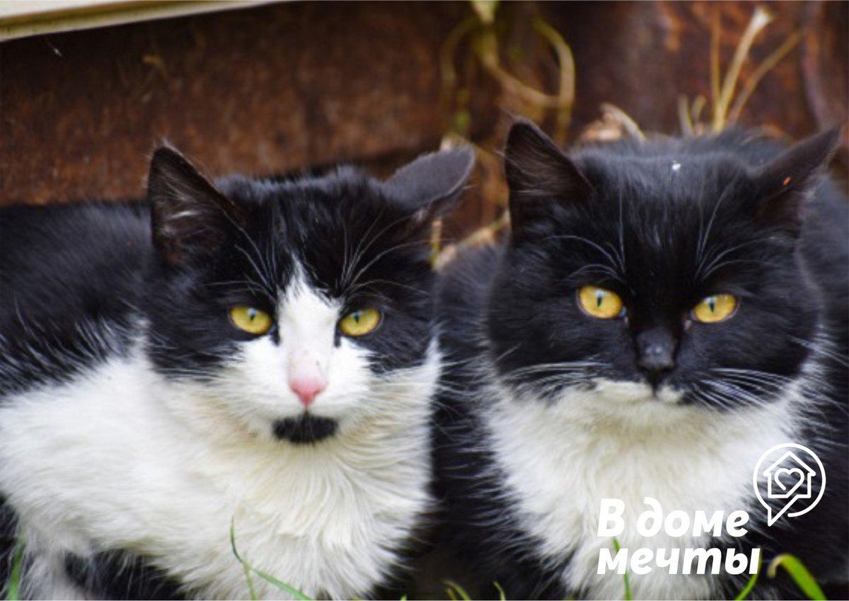 Самые ласковые и добрые кошки: топ-12 пород