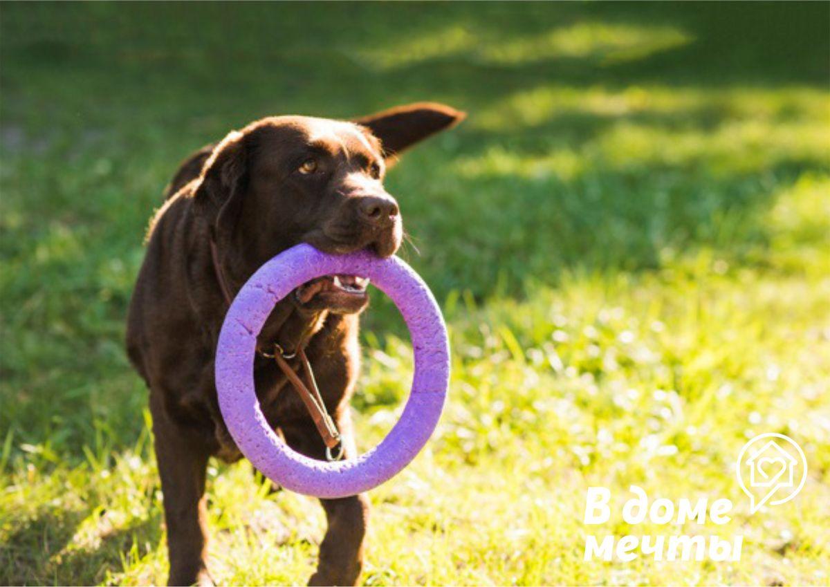 ✔Мягкие. Некоторые виды мягких игрушек допустимо покупать собакам, особенно, если питомец проживает в квартире