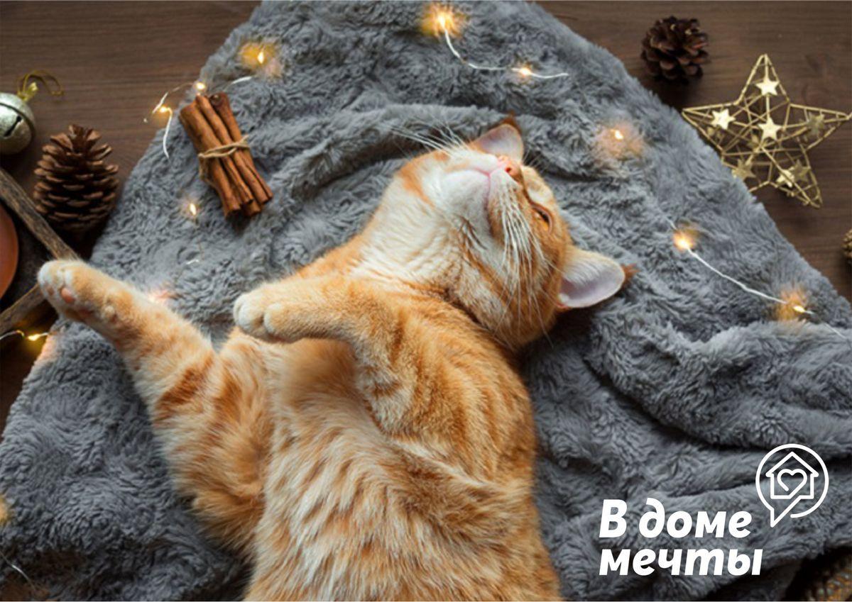 Как выбрать лежанку - идеальное спальное место для кошки