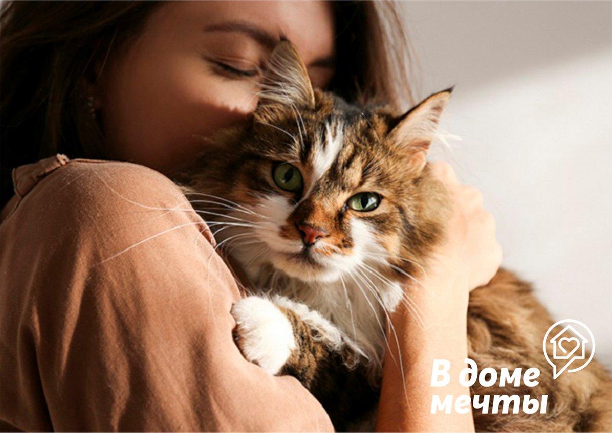 Ищите дружелюбную и спокойную кошку? Присмотритесь к этим популярным породам!