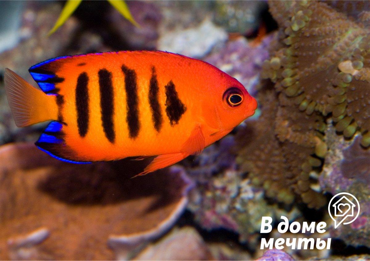 Как кормить аквариумных рыбок: нормы кормления и лучшие варианты корма