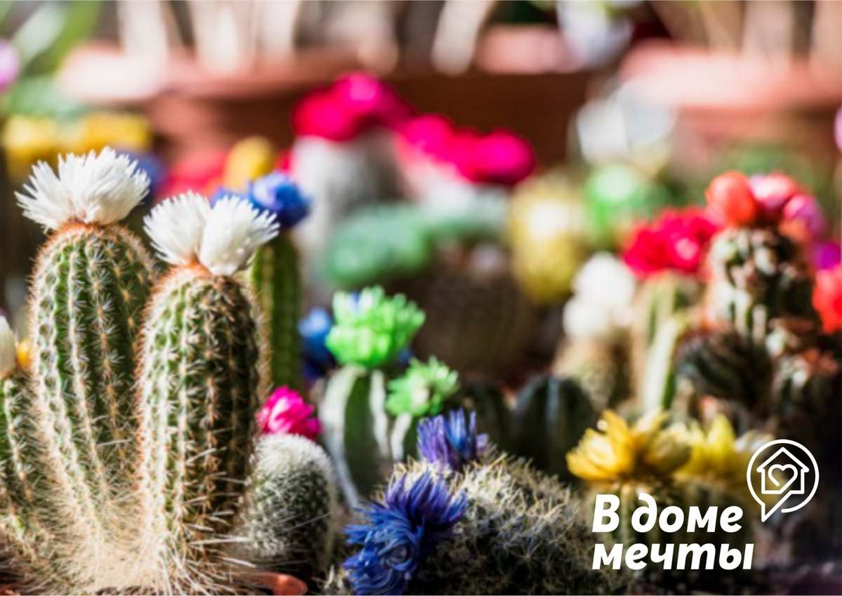 Цветущие кактусы: семь популярных видов