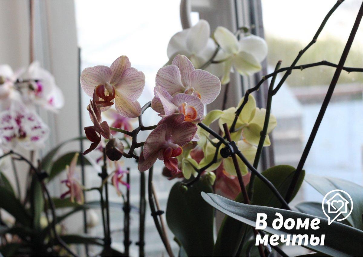 Чтобы орхидея комфортно чувствовала себя летом