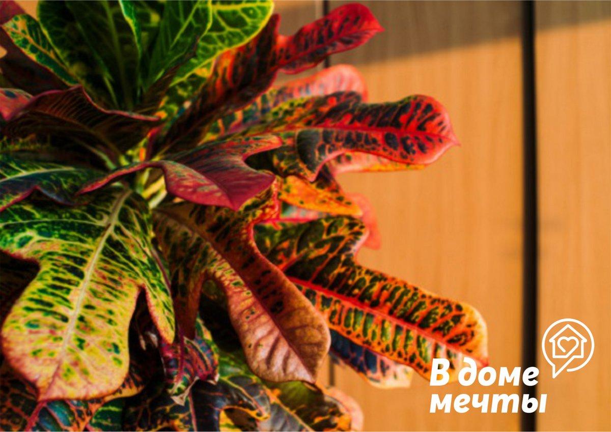 Размножать растение можно и семенами