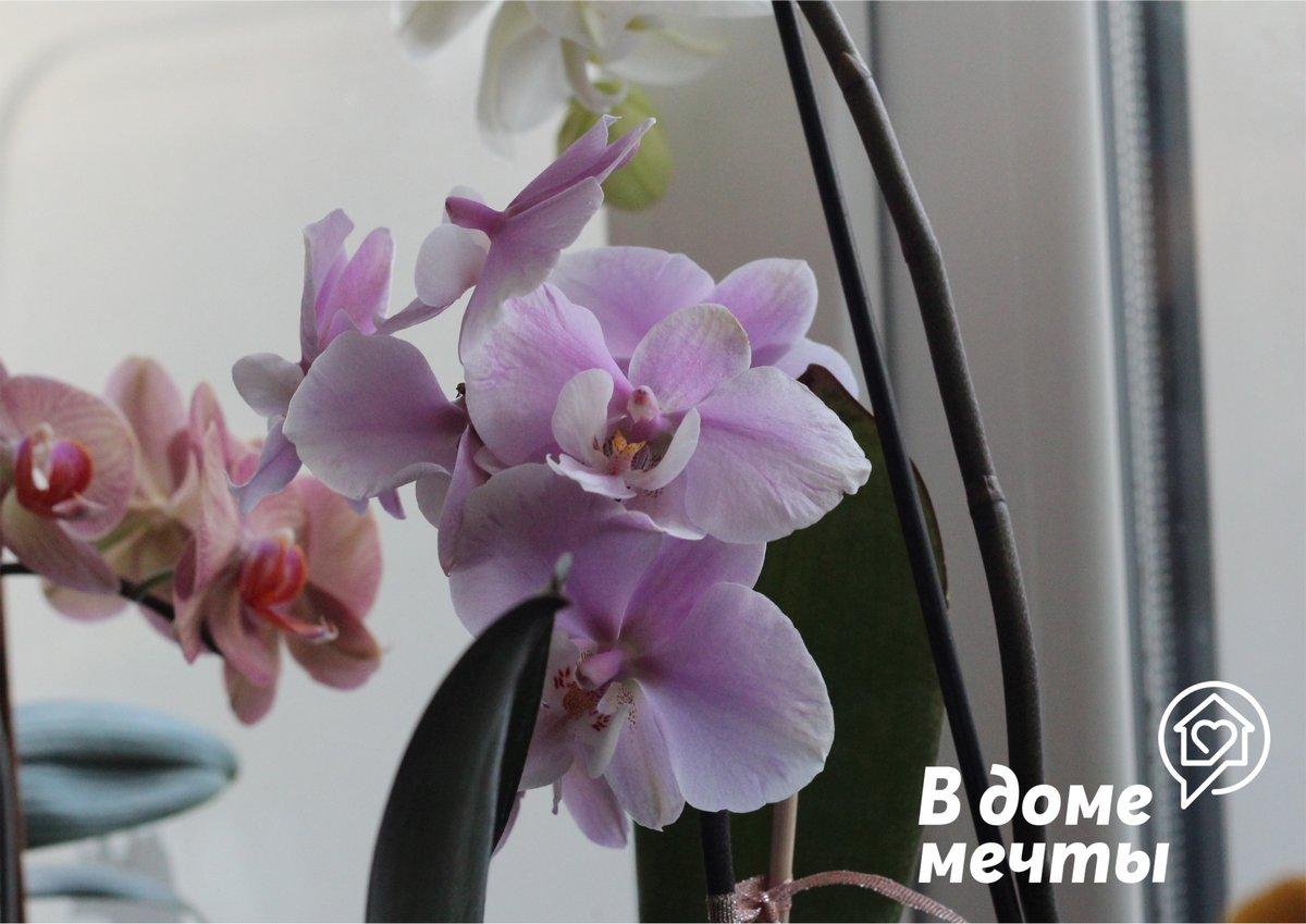 Поливать орхидные летом нужно чаще
