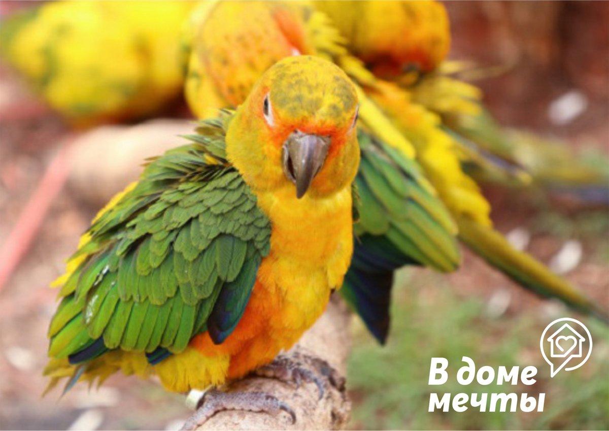 Определяем половую принадлежность у попугая: ценные лайфхаки