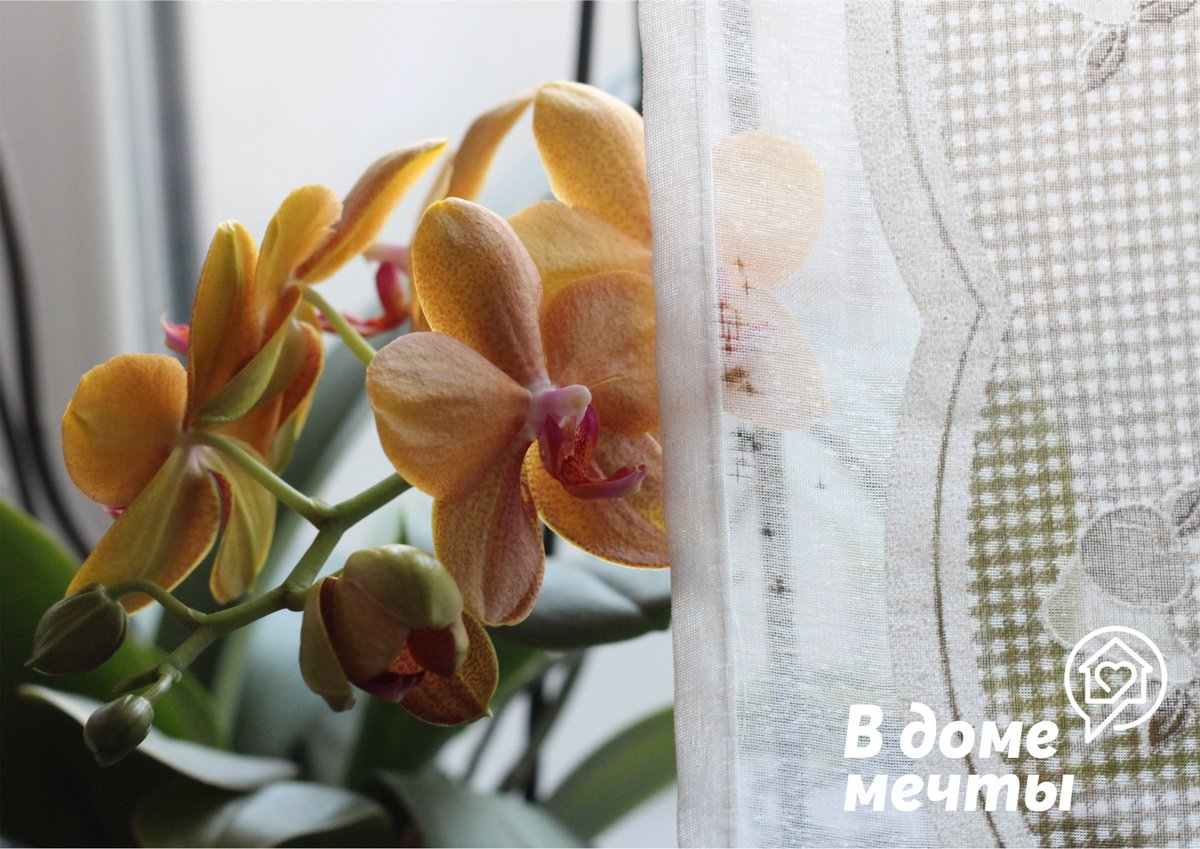 Как спасти пострадавшую орхидею