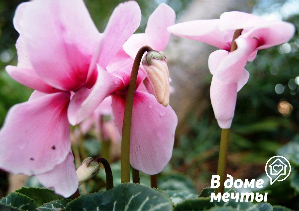 Топ-10 самых опасных комнатных растений, которые могут навредить здоровью