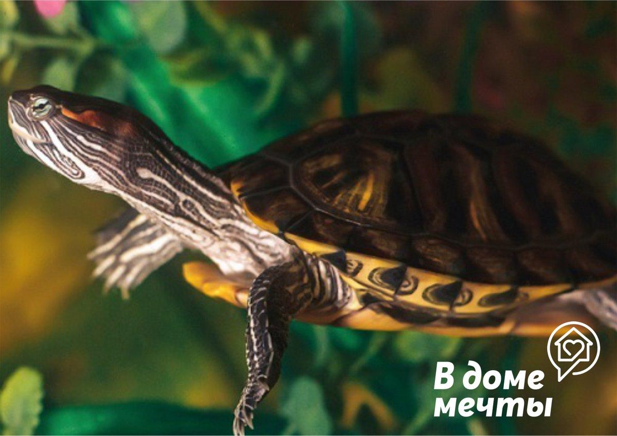Аквариум для черепашки: подборка лучших водорослей для оформления