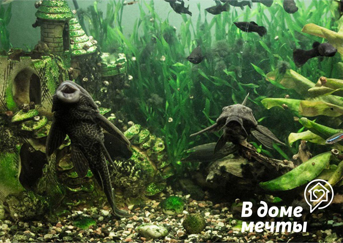 Позеленение воды в аквариумах: как быстро устранит проблему