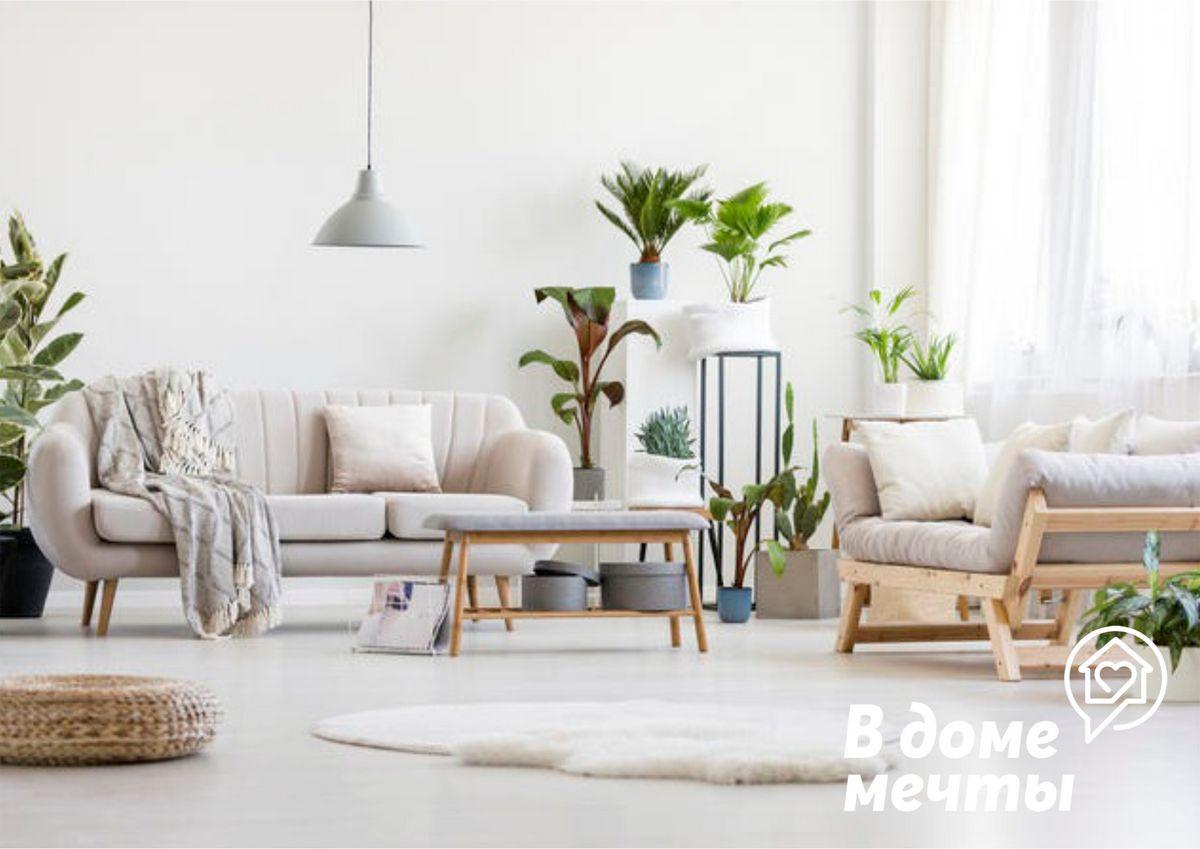 Топ-8 комнатных культур, которые привлекут в дом деньги