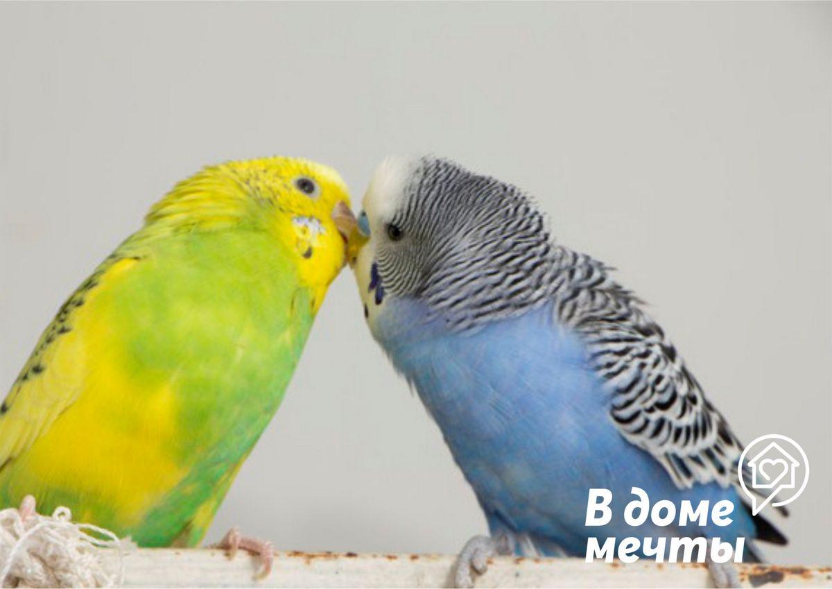 Питание для попугая во время линьки