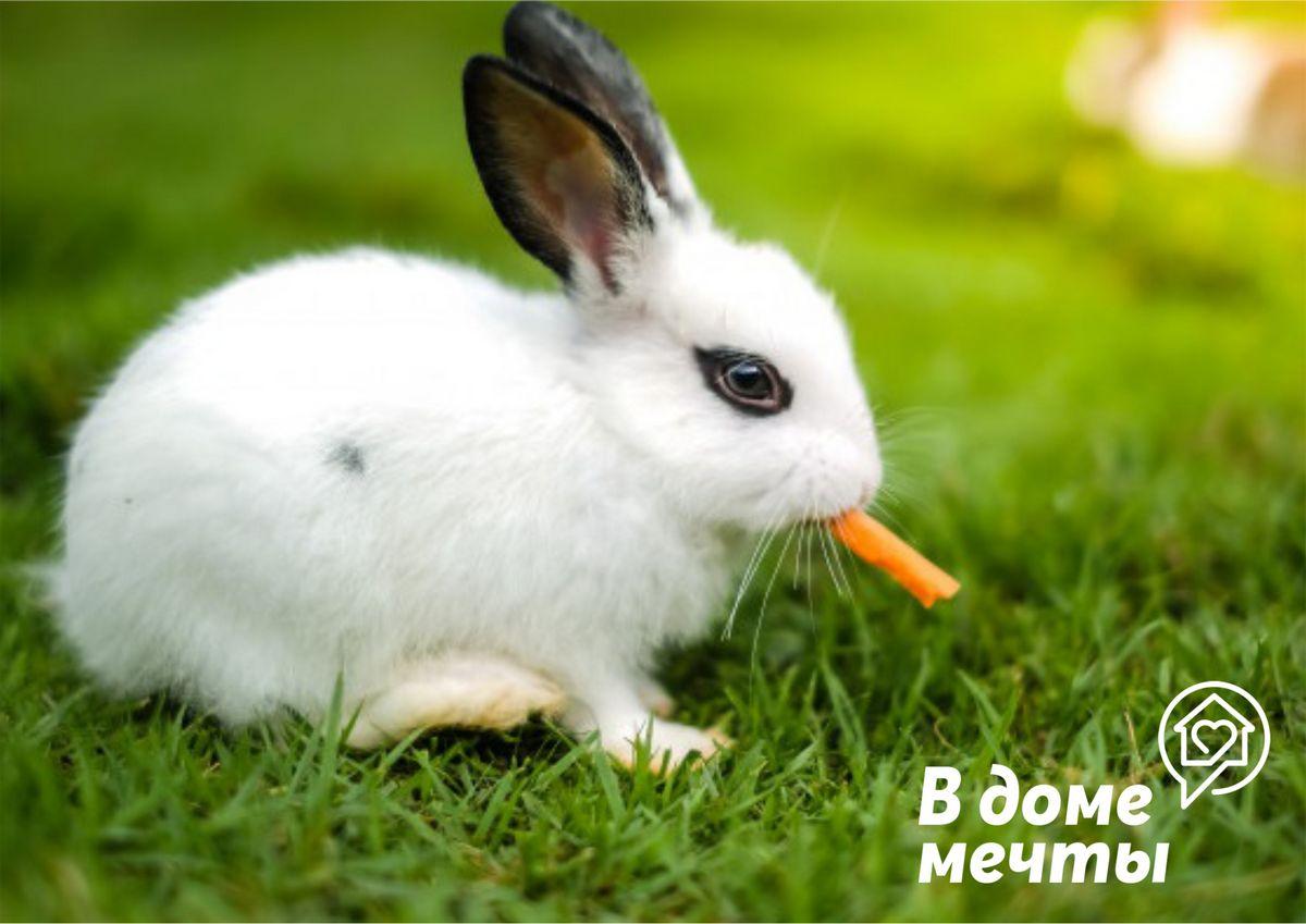 Какие травы можно давать кролику