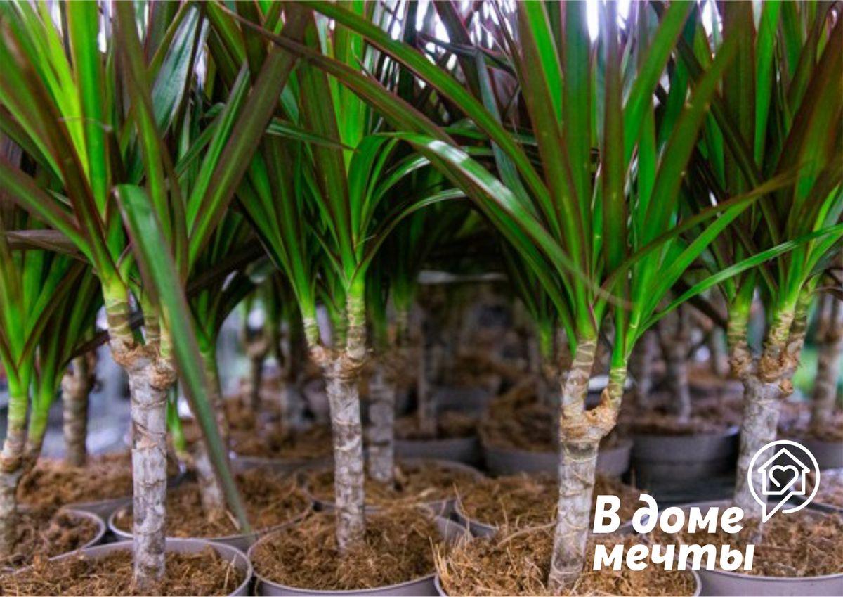 Чем меньше, тем лучше: девять комнатных растений, которые нуждаются в минимальном уходе