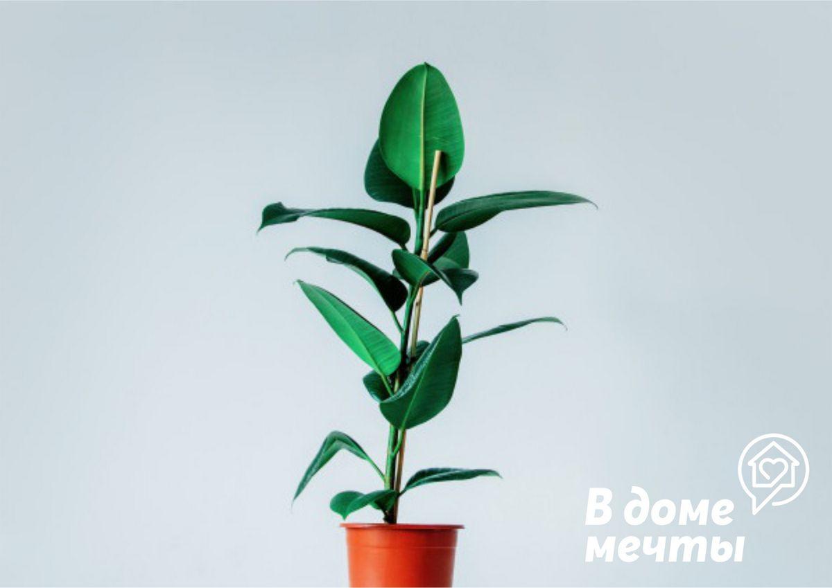 Мини-деревья: топ-12 лучших разновидностей для дома и квартиры