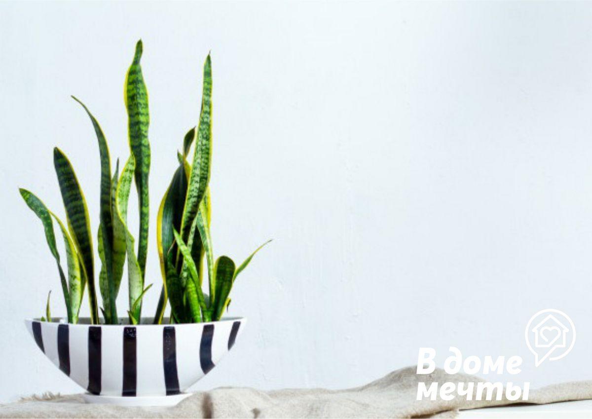 Лучшие комнатные цветы для кухни: самые неприхотливые и декоративные