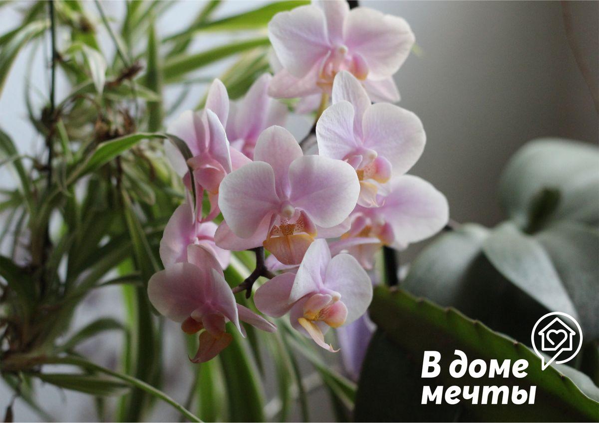 Обрезка корней орхидеи: зачем нужна эта процедура и как правильно обрезать корни