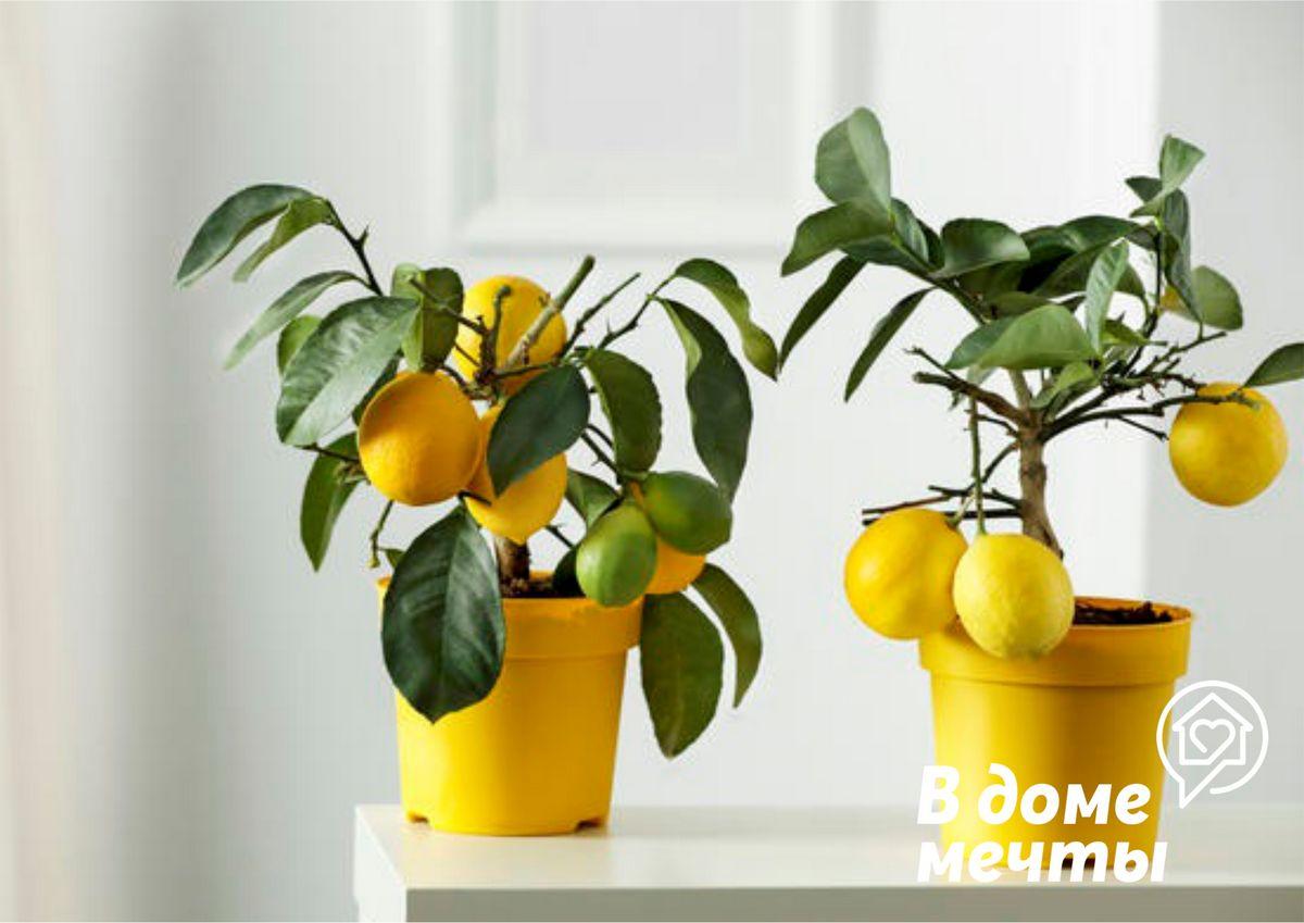 Лучшие комнатные цветы для оформления спальной комнаты