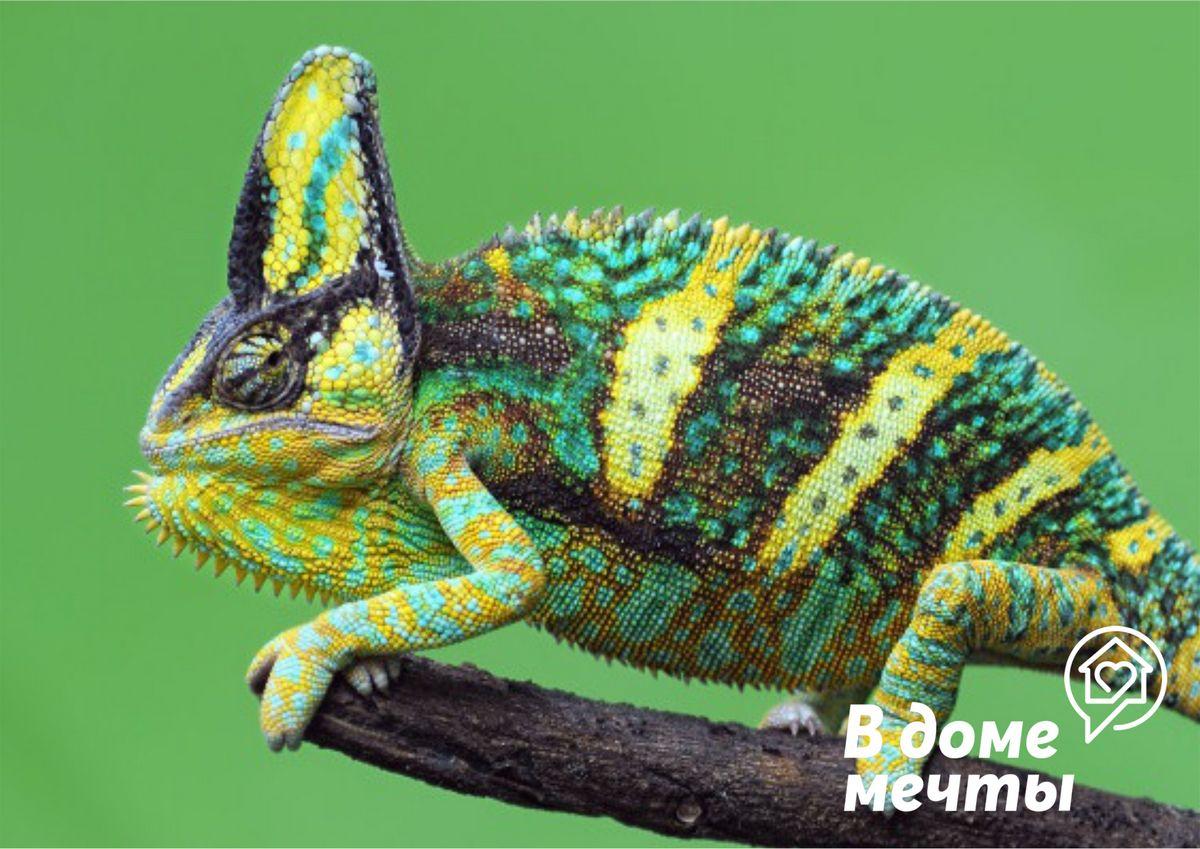 Корм для рептилии