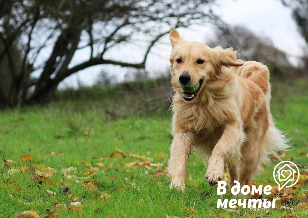 На собаке обнаружен клещ: как оказать первую помощь домашнему питомцу