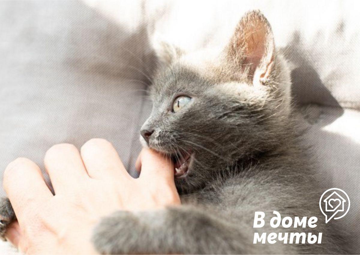 Что делать, если домашняя кошка проявляет агрессию