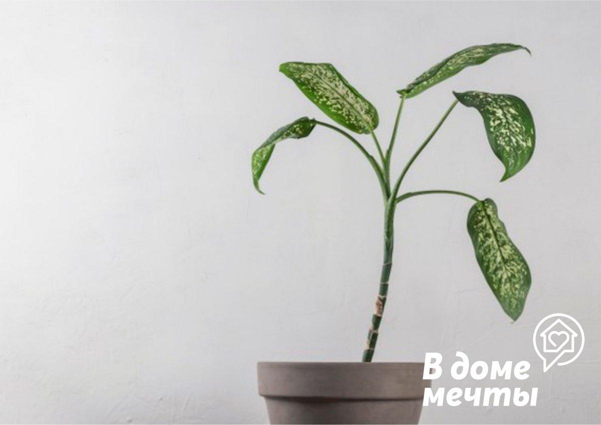 Самые ядовитые и токсичные: топ-10 опасных домашних растений