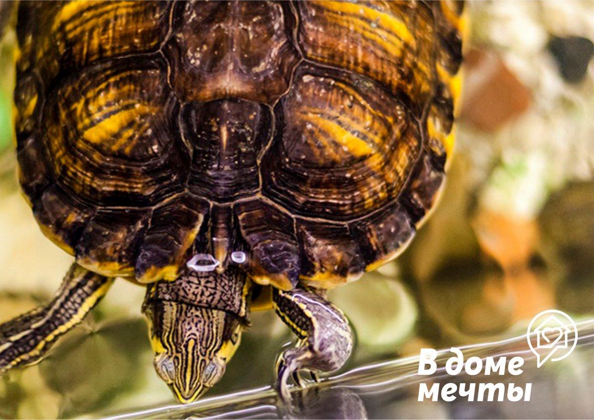 Почему растения в аквариуме черепахи важны