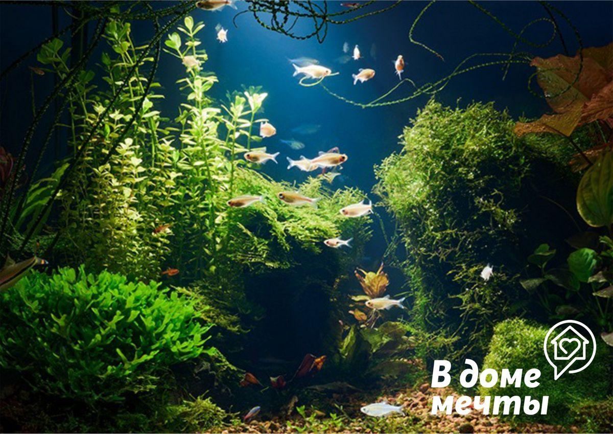 Зеленая вода в аквариуме: методы качественной очистки