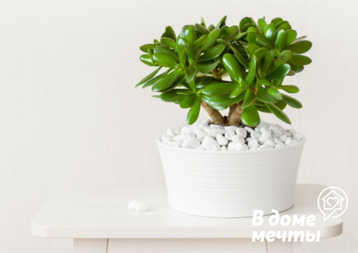 Привлекаем удачу: топ-8 комнатных цветов для привлечения богатства и удачи в дом
